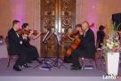 Kwartet smyczkowy Con Forza-oprawa muzyczna uroczystości - 4
