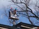 Wycinka i przycinka drzew podnośnikiem koszowym do 3,5 tony Milanówek