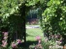 OGRODY KIELCE.Projektowanie i zakładanie ogrodów Kielce - 5