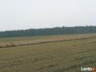 Sprzedam działkę o pow. 3000 m2 ok. 15 km od Płońska - 3
