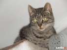 MIEDNICA - młoda kotka po wypadku szuka spokojnego domu Warszawa