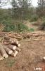 wycinka drzew wawer 502*501*660