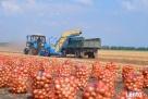 Ukraina. Warzywa, ziemniaki 0,25 zl/kg. Grunty rolne 150 zl