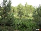 Sulejówek - Węgrów. Budowlana, warunki zabudowy, przy lesie - 6