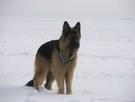 Psycholog dla psów/ Behawiorysta dla psów