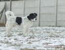 Dropek młody cudny psiak szuka domu - 2