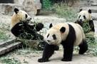 Pekin i okolice - 2