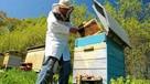 Sprzedam pasiekę ule warszawskie 10 uli z pszczołami