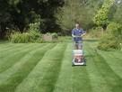 Usługi OGRODNICZE Odnawianie trawników ogrodów. TANIEJ