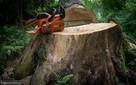 Wycinki Drzew