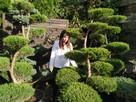 Rośliny formowane , Drzewa i krzewy formowane Bonsai- śląsk