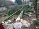 Jarosław przycinka przycinanie drzew Firma Trawka - 4