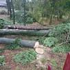 Jarosław przycinka przycinanie drzew Firma Trawka - 3