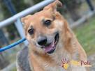 SZAMPAN-nieduży, delikatny, nieśmiały psiak szuka dobregoDOM