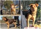 Rudy wspaniały pies - 6