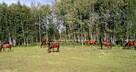 Rozwojowe ranczo - już gotowe na przyjęcie ponad 20 koni.