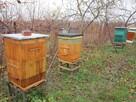 pszczoly ule odklady - 3