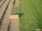 Regeneracja trawników. Usługi ogrodnicze. Trawniki z rolki. - 2