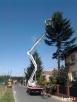 Wycinka drzew Bytom pielęgnacja drzew Bytom