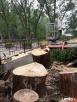 Wycinka drzew Bytom pielęgnacja drzew - 2