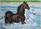 Dzikie konie - Teresy Kopńskiej