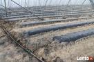 Trawniki, systemy nawadniające, automatyczne nawodnienia - 2