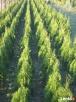 Szkółka drzewek i krzewów odobnych Rymanów