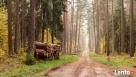 Sprzedaż drewna Myszków t.507278093 Żarki