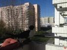 Zabezpieczenie balkonu . Siatka dla kota - 2