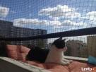Zabezpieczenie balkonu . Siatka dla kota - 1
