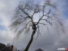 Wycinka drzew,usługi rębakiem i koszenie kosiarką bijakową - 3