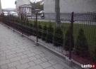 Przęsło ogrodzeniowe, nowoczesny design, panel ogrodzeniowy - 6