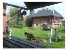 Dom na Mazurach - 1
