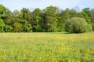 Teren pod ranczo lub domki rekreacyjne - 1