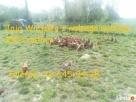 Jaja, Jajka Wiejskie Kury z wolnego wybiegu 100% Natura - 1