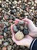 Kamień płukany 16-32 mm PRODUCENT
