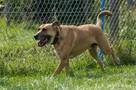 Pluto niezwykle przyjacielski pies szuka domu - 5
