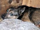 RAFCIA I KORALIK-maleńkie, nieśmiałe psiaki (4-5 kg)-ADOPCJA - 1