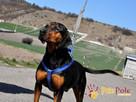DEO-piękny psiak w typie gończego pilnie szuka domu - 8