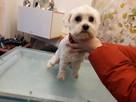 Strzyzenie psow, kotow, PSI fryzjer, DWORCOWA51 - 7