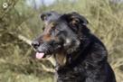 OTOZ Animals Dąbrówka-Koma po stracie właściciela szuka domu