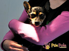RAMBULINKA-bardzo zaniedbana psia kruszynka-szukamy DOMU - 3