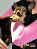 RAMBULINKA-bardzo zaniedbana psia kruszynka-szukamy DOMU - 2