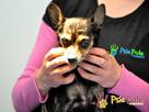 RAMBULINKA-bardzo zaniedbana psia kruszynka-szukamy DOMU - 8