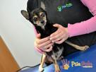 RAMBULINKA-bardzo zaniedbana psia kruszynka-szukamy DOMU - 5