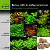 Zestaw roślin do małego akwarium, 37 sadzonek +GRATIS