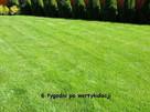 Wiosenny serwis Twojego ogrodu, bezpłatna wycena!!! - 6