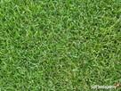 Oddam trawę w sezonie letnim