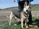 RAPUŚ-wspaniały, miły, pogodny, niewidomy psiak szuka dobreg - 5