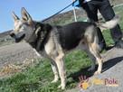 RAPUŚ-wspaniały, miły, pogodny, niewidomy psiak szuka dobreg - 15